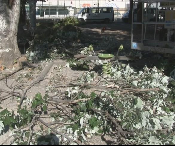 Una gran rama de árbol se desploma sobre un parque infantil en Cartagena
