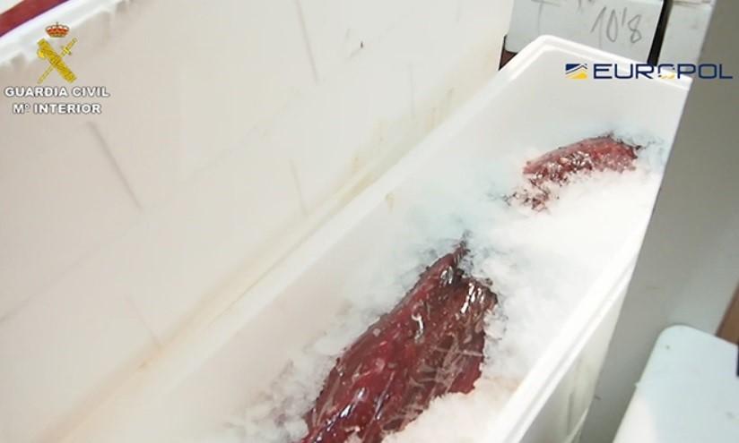 Detenidas 79 personas, 5 en Murcia, por vender atún de pesca ilegal y sin sello sanitario