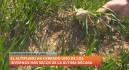 El Altiplano da por perdida la cosecha de cereal tras cuatro meses sin lluvia