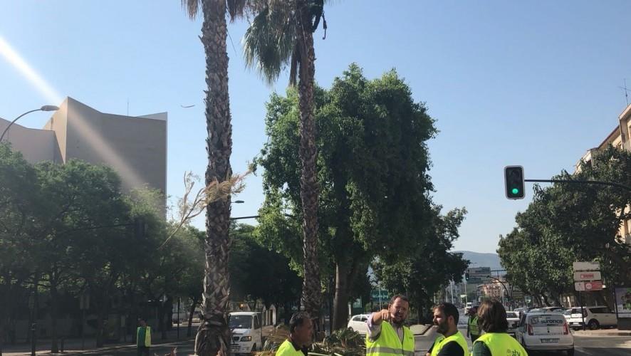 El Ayuntamiento de Murcia trabaja en la mejora estética de la ciudad con motivo de la Feria