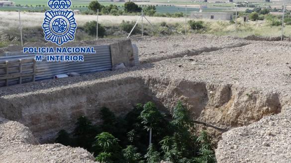 Cae un punto de venta de droga en Yecla con dos detenidos y 39 plantas de marihuana