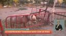 Detenido por practicar sexo con un poni en Puente Tocinos (Murcia)