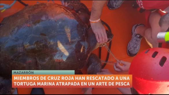 Rescatan a una tortuga marina enganchada en un arte de pesca en Mazarrón