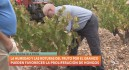 El granizo destroza parte de la cosecha en la Denominación de Origen Bullas