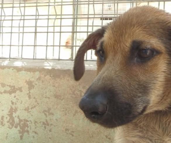La Policía de Cartagena busca al individuo que tiró a tres perros a una balsa de alquitrán