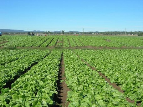 Asaja Murcia reclama un plan eficaz de internacionalización para el sector agroalimentario murciano