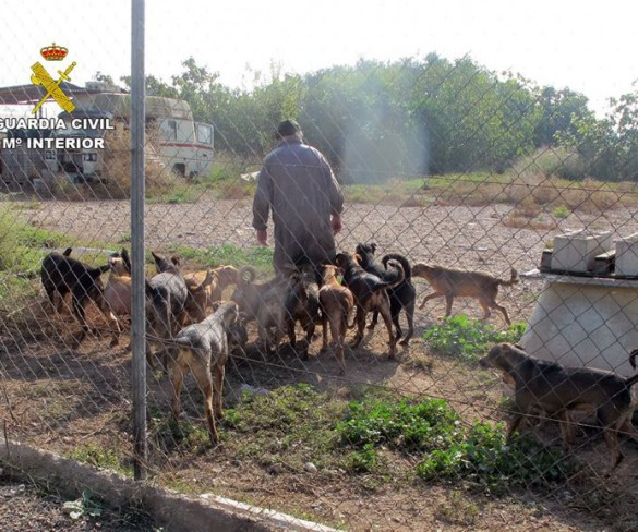 Abandona a su perro a morir atacado por una manada de otros 21 canes