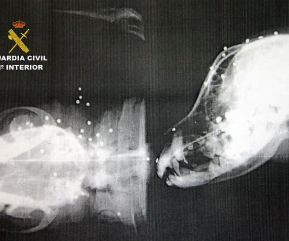 La Guardia Civil instruye diligencias a un cazador por disparar a dos perros