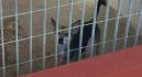 Rescatan a un perro que se encontraba abandonado más de una semana en un balcón de Cartagena