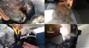 Detenida una mujer por dar palizas constantes a varios perros en su casa de Murcia