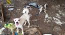 Investigan a una mujer que mantenía a más de 15 perros desnutridos