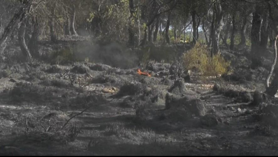 El incendio de Yecla se ha cobrado 1,6 hectáreas de monte calcinado