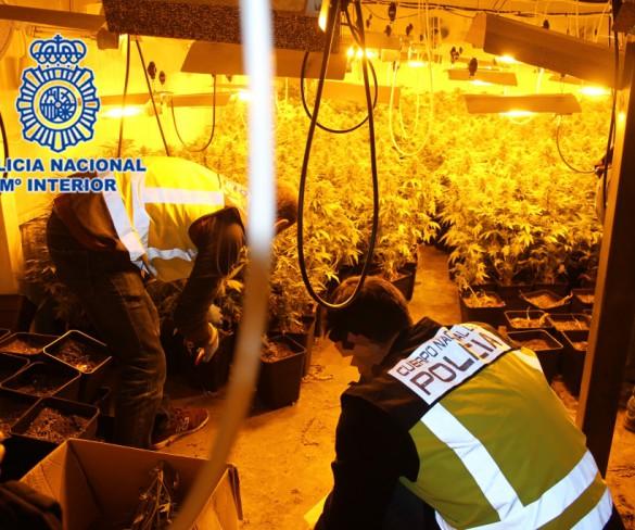 Detenidos los 9 miembros de una banda que cultivaba marihuana en la Región y la vendía en Europa