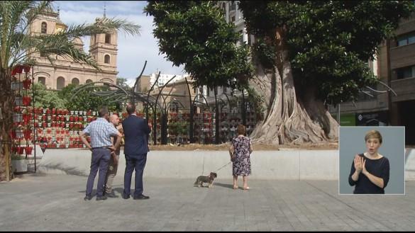 La caída del emblemático ficus de la murciana plaza de Santo Domingo cumple dos años