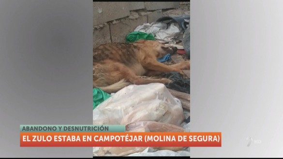 Investigan por maltrato en Molina al dueño de dos perros que hallaron agonizantes